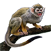 Item squirrelmonkey 01