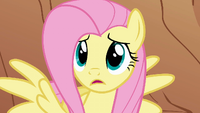 "Fluttershy ""But why?"" S1E21"