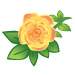 Pink Yellow Roses-icon
