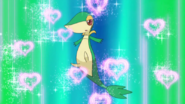 Ash Snivy Attract