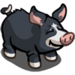 Berkshire Pig-icon