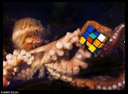 Octopus with rubik&#39;s
