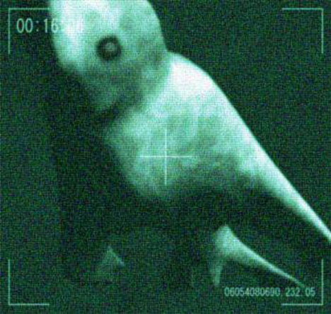 http://images2.wikia.nocookie.net/__cb20110928192047/cryptozoologycryptids/images/1/1c/Antarctic_humanoid_2.jpg