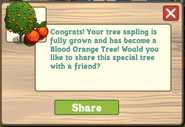 Blood Orange Tree Growth Message