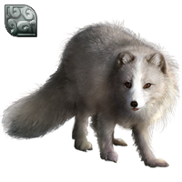 Huge item arcticfox silver 01