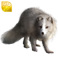 Huge item arcticfox gold 01