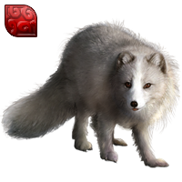 Huge item arcticfox ruby 01