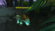 (Echo Isles) Wildmane Cat