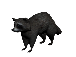 300px-Mapache2.png