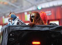 TheMuppets-WorldPremiere-ElCapitan-(2011-11-12)-16