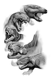 Therapsid Morph test