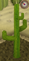 Cactus8