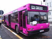 Constanta pink bus