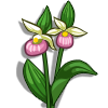 Lady Slipper-icon