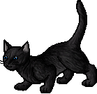 Crowfeather.apprentice