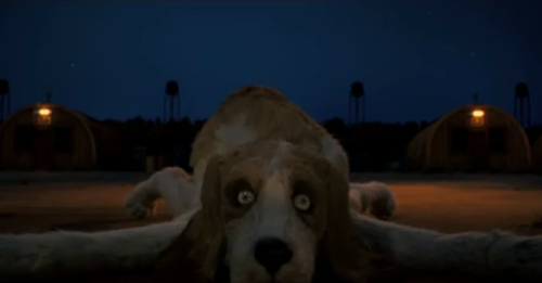 Does Wes Anderson Hate Dogs? | The New Yorker