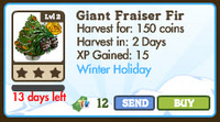 Giant Fraiser Fir Tree Market Info
