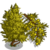 Yellow Juniper Tree-icon