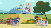 Earth ponies, Pegasi and unicorns S02E11