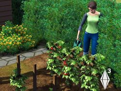 SIMS3GARDEN2