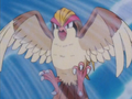 Falkner Pidgeot Whirlwind.png