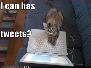 Lolcat-i-can-has-tweets