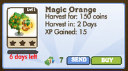 Magic Orange Tree Market Info (2012)