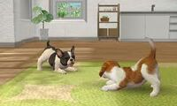 Nintendogs Plaza