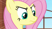 Fluttershy stare S2E19