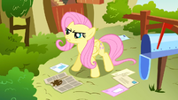 Fluttershy declare promise S2E19