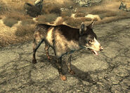 Dogmeat FO3