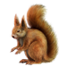 Item red squirrel 01