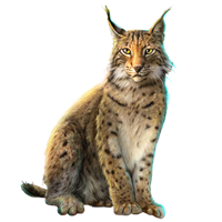 Huge item eurasianlynx 01
