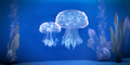Belan Jellyfish.png