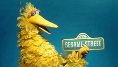 BigBird69SSsign