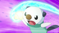 EP720 Oshawott usando concha filo