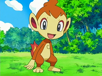 Chimchar anime