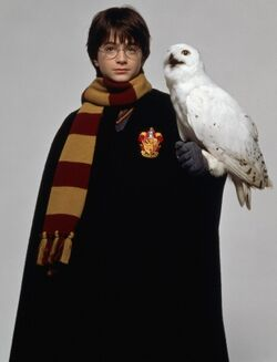 PromoHP1 Harry Potter Hedwige