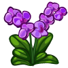 Purple Orchid-icon