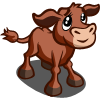 Red Poll Calf-icon