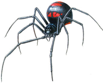 Black widow Spider. Monsters Project