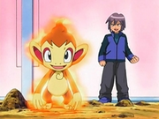 EP484 Chimchar de Paul activando mar llamas