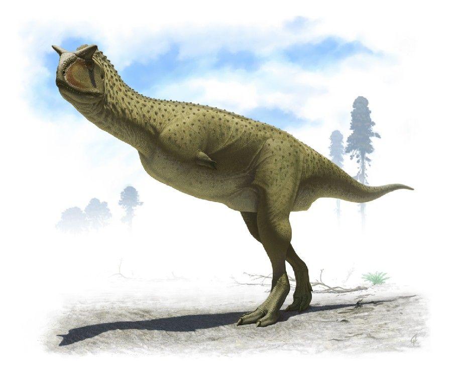 carnotaurus dinopedia the free dinosaur encyclopedia