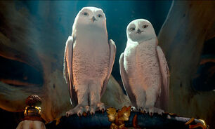 Legend-of-the-owls-006