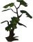 Healthy sapling detail.png