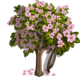 Summer Cherry Tree-icon