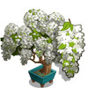 White Wisteria Bonsai Tree-icon