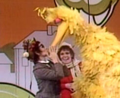 Kiss Big Bird watcher