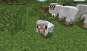 Tiny-sheep