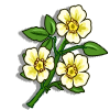 Cherokee Rose-icon